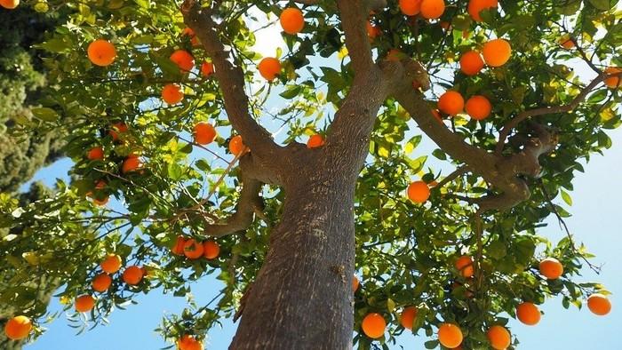 Zamyslenie / Ovocie