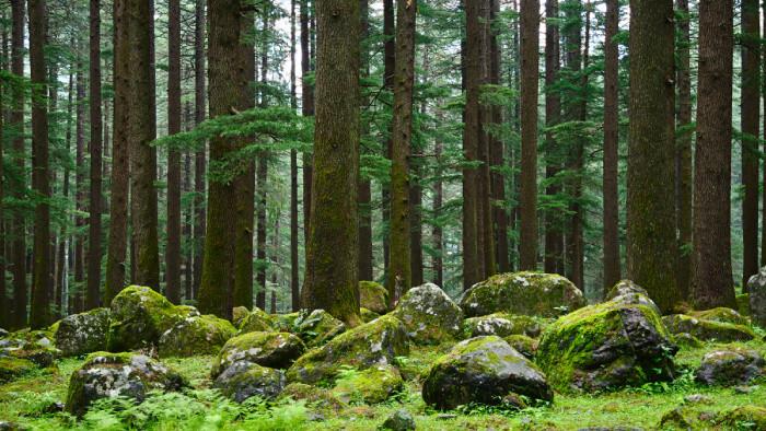 Výzvu na ochranu lesa na bratislavskej Kalvárii podpísalo 6000 ľudí