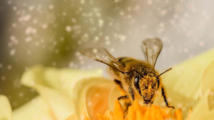 Repková medová znáška