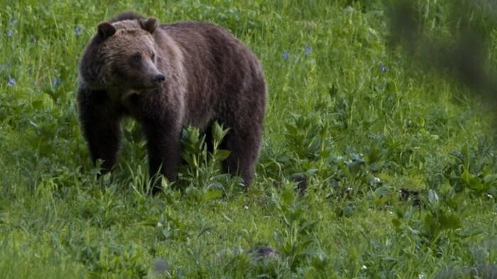 Unbearable bear situation?