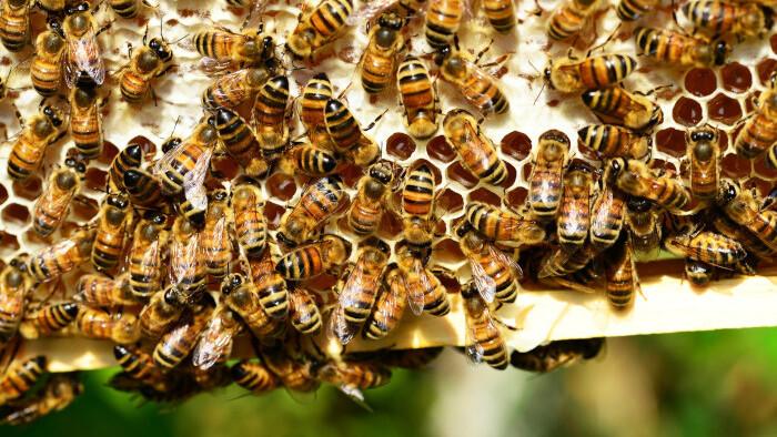 Predmet v škole: Včelárstvo