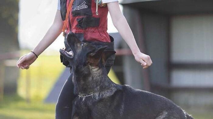 Kutyakiképző: Elég naponta 10 perc a kutyánkkal, hogy hallgasson ránk
