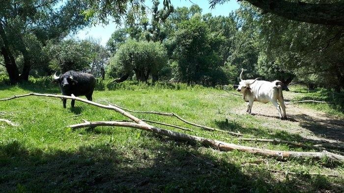 BROZ: Öko-Tourismus und Naturschutz in der Slowakei