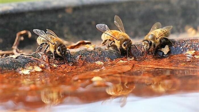 Zo zeme (s Barbarou) / Napájadlo pre včely a hmyz