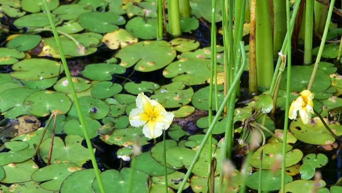 Ohrozené rastliny na Slovensku