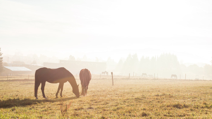 Energia z chrbta koňa