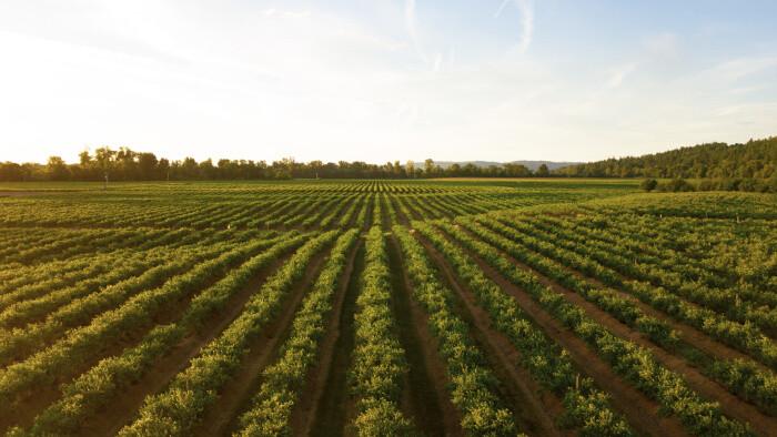 Moderné a ekologické formy v poľnohospodárstve lákajú aj mladých