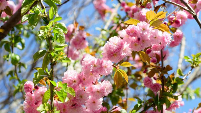 Бабушкин сад появится рядом со школой