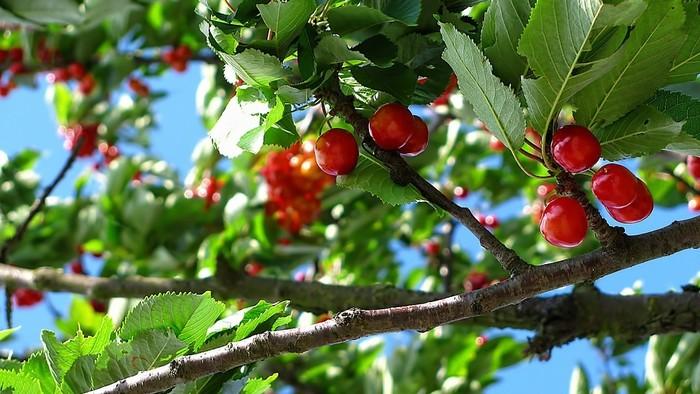 Zo zeme (s Barbarou) / Vysádzanie stromov a kríkov na jeseň