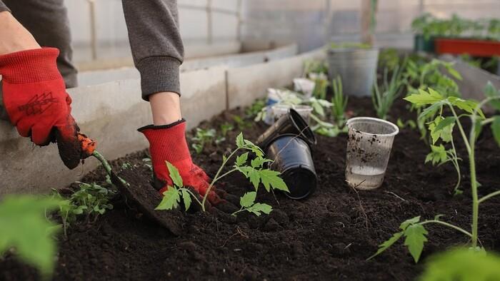 Zo Zeme (s Barbarou) / Záhradné práce v septembri
