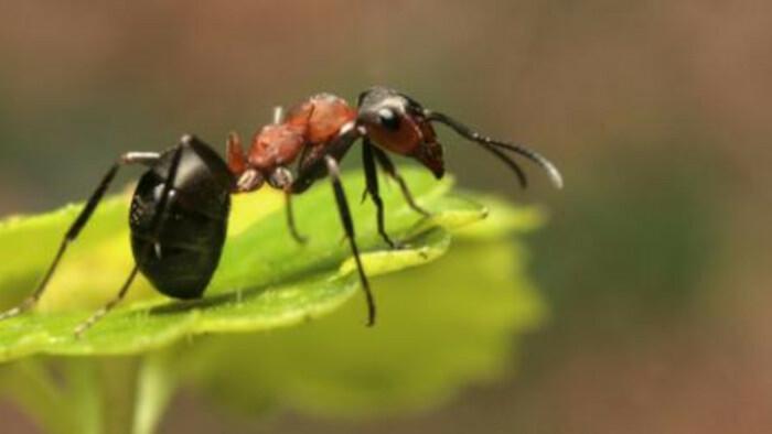Mravce. Prírodná supermocnosť