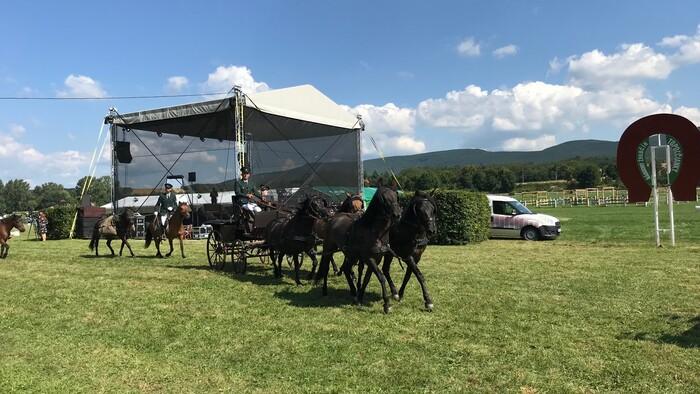 Národný žrebčín v Topoľčiankach oslavuje storočnicu