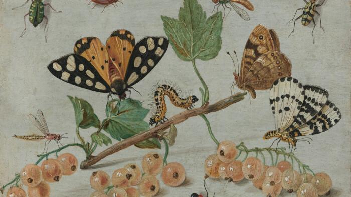 Hmyzí domček aj v Považskej Bystrici