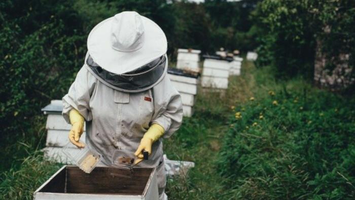 Výroba úľov