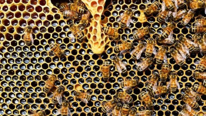 Poloninský med