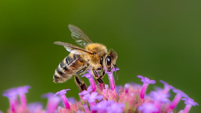 Včelárstvo na vzostupe