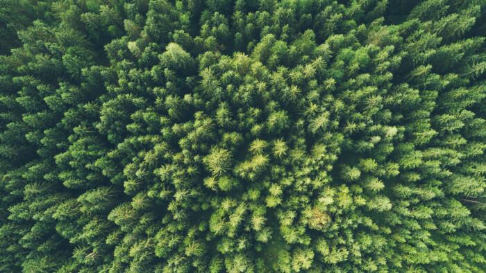 Čo nového v mestských lesoch?