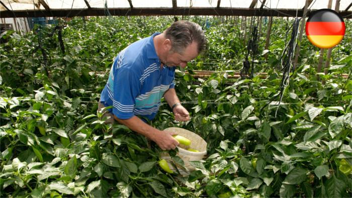 Agro-Sektor für erleichterte Beschäftigung von Saisonarbeitskräften
