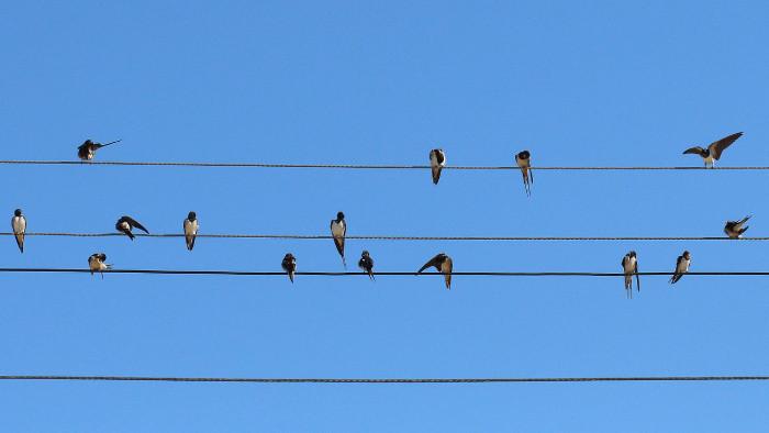 Fórum: Vtáky narážajú do presklených plôch