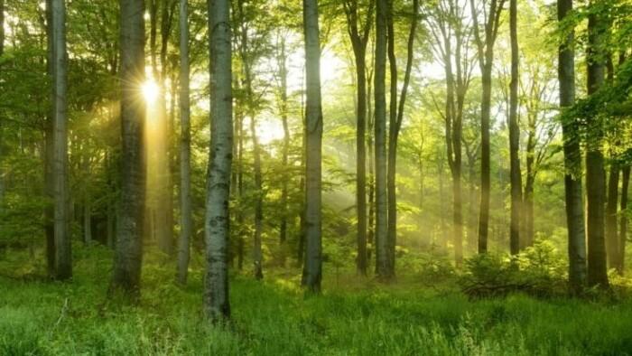 Műveljük, vagy inkább bízzuk a természetre a védett erdőinket?