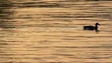 Dobrovoľníci čistili brehy rieky Rajčanky