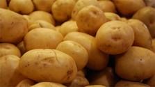 Súťaž v pečení tradičného Hiadlovského krumpľovníka