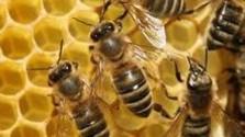 Včelársky rok