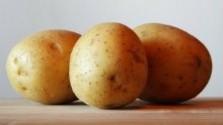 Súťaž v pečení Hiadlovského krumpľovníka