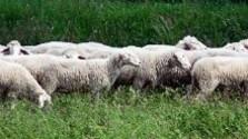 Aktuálna situácia na farmách
