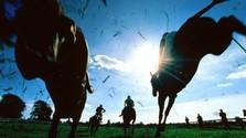 Konské športy - Dostihy