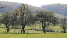 Surge la necesidad de proteger las especies autóctonas de árboles frutales