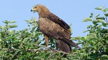 Ochrana orlov