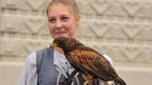 Schutz der Greifvögel in der Slowakei