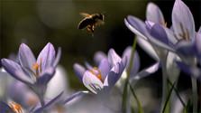 vcela pocasie teplo jar leto kvety luka priroda_tasr_ap.jpg