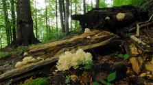 Miznúci les