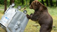 Hohe Tatra: Der Bär ist los