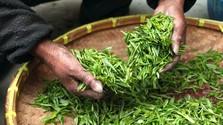 Netradičné druhy čaju