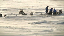 Fjällräven Polar severskou divočinou.
