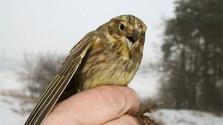 Zoznam zaznamenaných vtáčích druhov rozšírili vzácne jedince