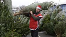 Les ventes d' arbres de Noël naturels augmentent d'une année à l'autre