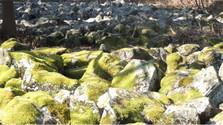 Kamenné moria
