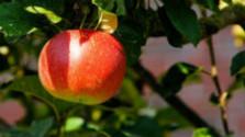 K veci: Ako ovplynia mrazy ovocinárov