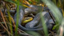 Príbeh na týždeň: Rozprávanie o hadoch