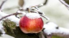 Kapnak-e kárenyhítést a gyümölcstermesztők?