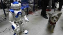 Akým hlasom sa nám roboty prihovárajú?