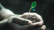 Naozaj? Môžu rastliny čistiť pôdu?