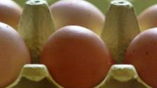 Klub farmárov: Čo spôsobuje nedostatok vajec na našom trhu