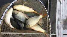 La pesca Navideña en Malé Zálužie