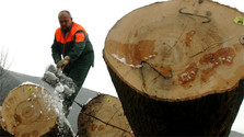 Parliament approves stricter control of accidental logging