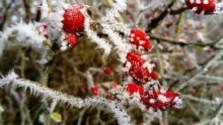 Klub farmárov: Ovocinári sa obávajú mrazov